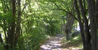 日本森林保健学会組織概要