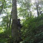 森の中での静かな休養