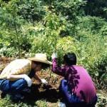 森づくりと作業療法の融合