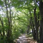 癒しの道2