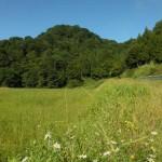 「癒しの森」のブナ林 (福島県 只見町) 2012年9月