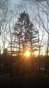 モミの木と夕陽