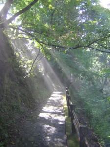 早朝の散策(今月のひとこと:5月)