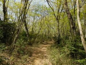 「青梅の森」の散策路