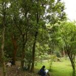 森林公園での自己カウンセリング