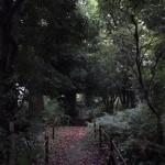 樹林の中にある散策路