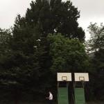 大樹は、学校のシンボル、記念碑的存在にもなります