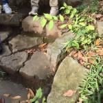 都内の公園でも、よく見れば小さな発見が。右上はムラサキシキブ、中央下にはヤマグワの稚樹があります。