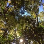 手入れをした林床に横たわると、こんな光景が見えます。太陽と樹冠が語りかけてくるようですね。