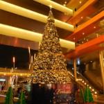 樹木は季節のシンボルにも使われます!メリークリスマス、そしてよいお年を!