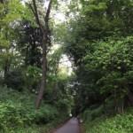 国分寺崖線の緑地