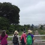 住宅街の緑地の風景