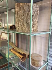 キハダの樹皮が飾られた、信州の薬局の店頭。標高1000m前後にキハダは自生します。