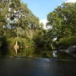 ミシガン州立大学の構内の風景。レッドシーダー川という大きな川が流れています