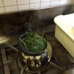 ヤマグワの葉を摘み取り、即席の桑茶を楽しむワークショップ!