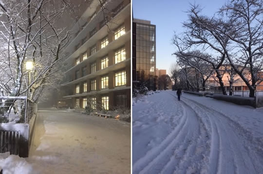 東京では、4年ぶりのまとまった雪降りになりました!