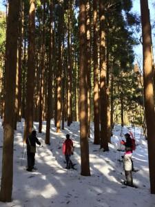 いつものスギ林も、雪が積もると、林間が歩きやすくなります!