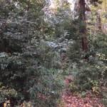 構内の鬱蒼とした木立のようす。植栽木と自然木が混交しています。