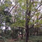 これからこの木立を整備していきます