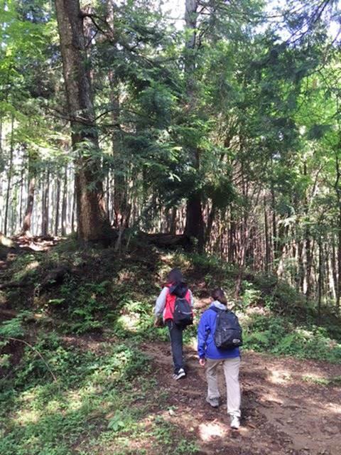 今月のひとこと「森歩きでの意外な効果」