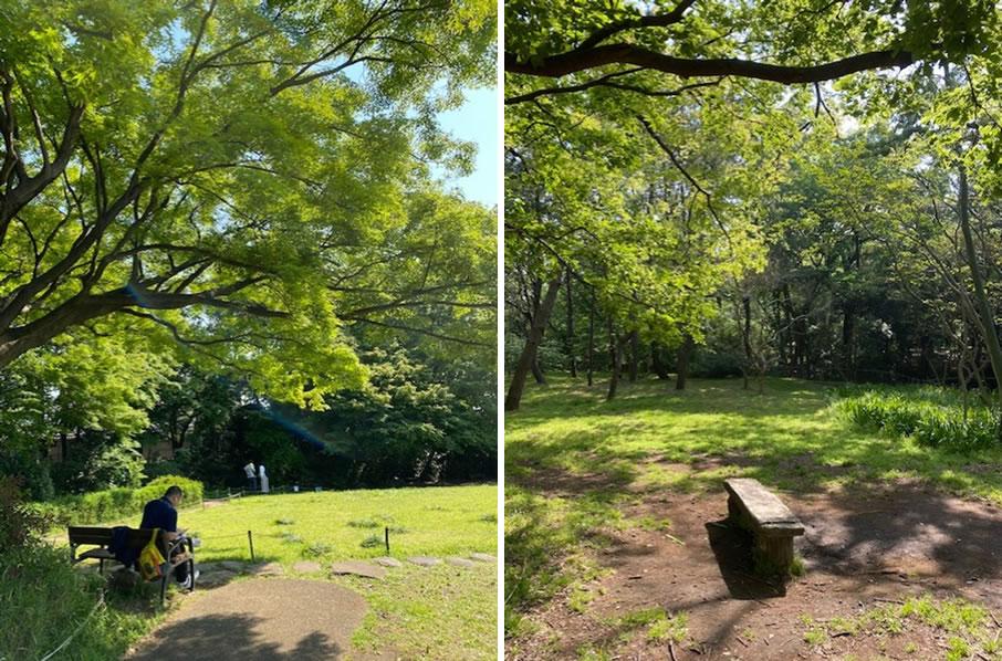 森林公園にも一人で過ごせるスペースの設置が必要?(※写真は、イメージです)